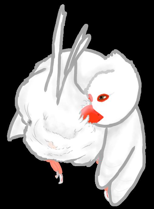 羽繕い白文鳥