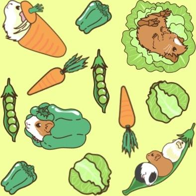 お野菜モルモット