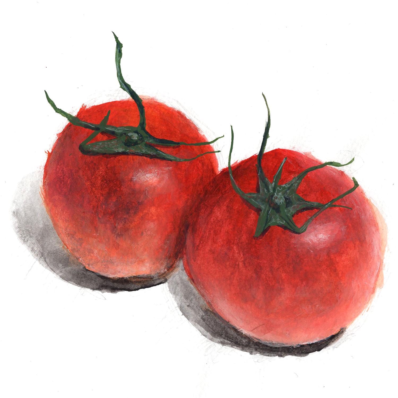 トマト2つ手描き