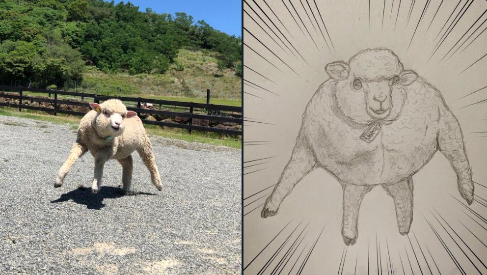 マッチョ羊