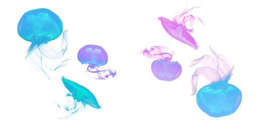 クラゲシリーズ
