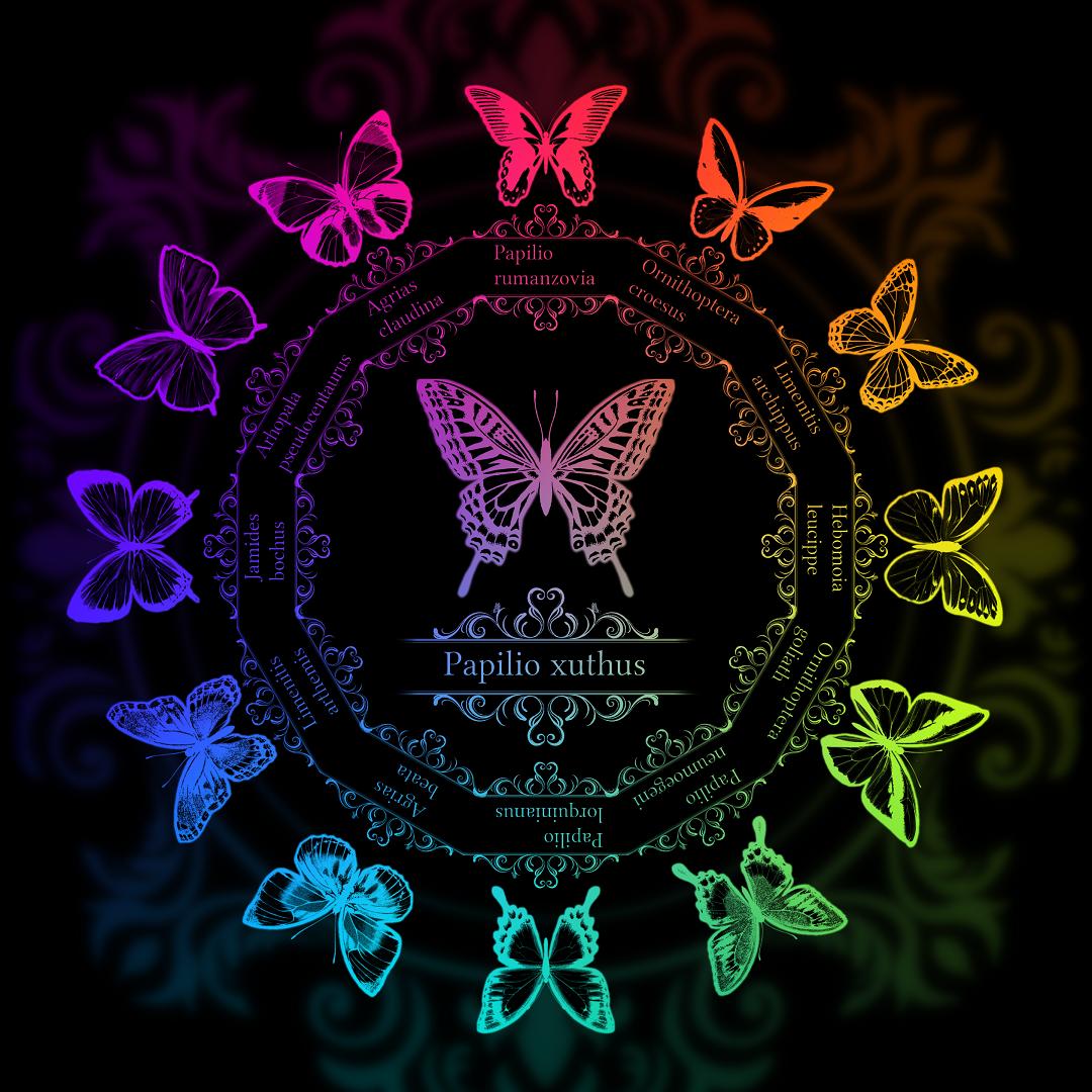 13 butterflies