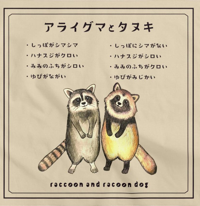 アライグマとタヌキ