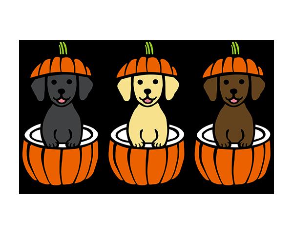 ハロウィンかぼちゃのラブラドール