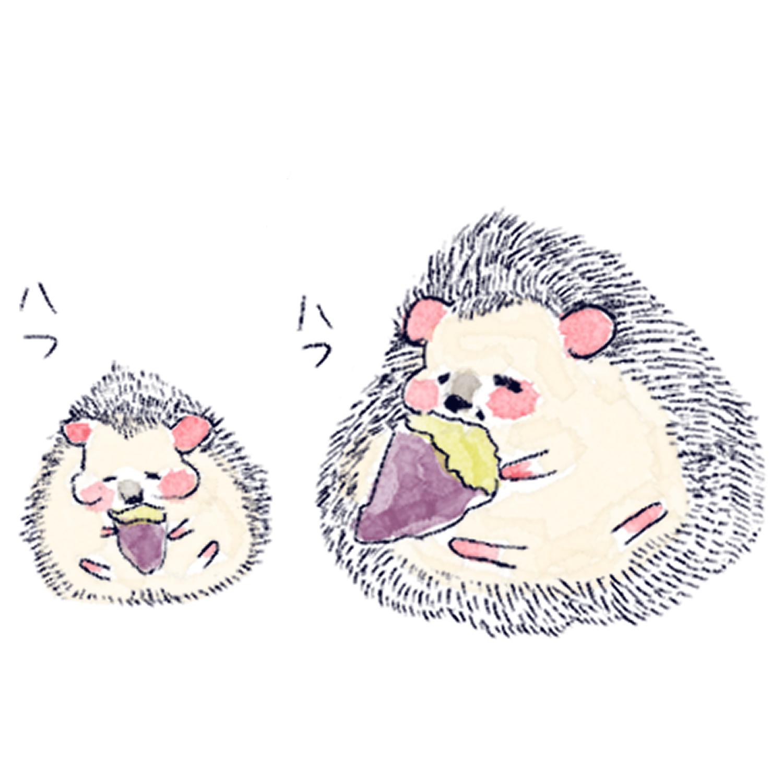 お芋を食べるハリネズミのソフィー