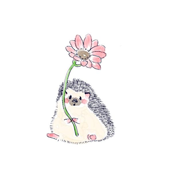 花をあげるハリネズミのソフィー