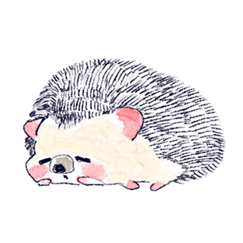 スヤスヤ寝ているハリネズミのソフィー