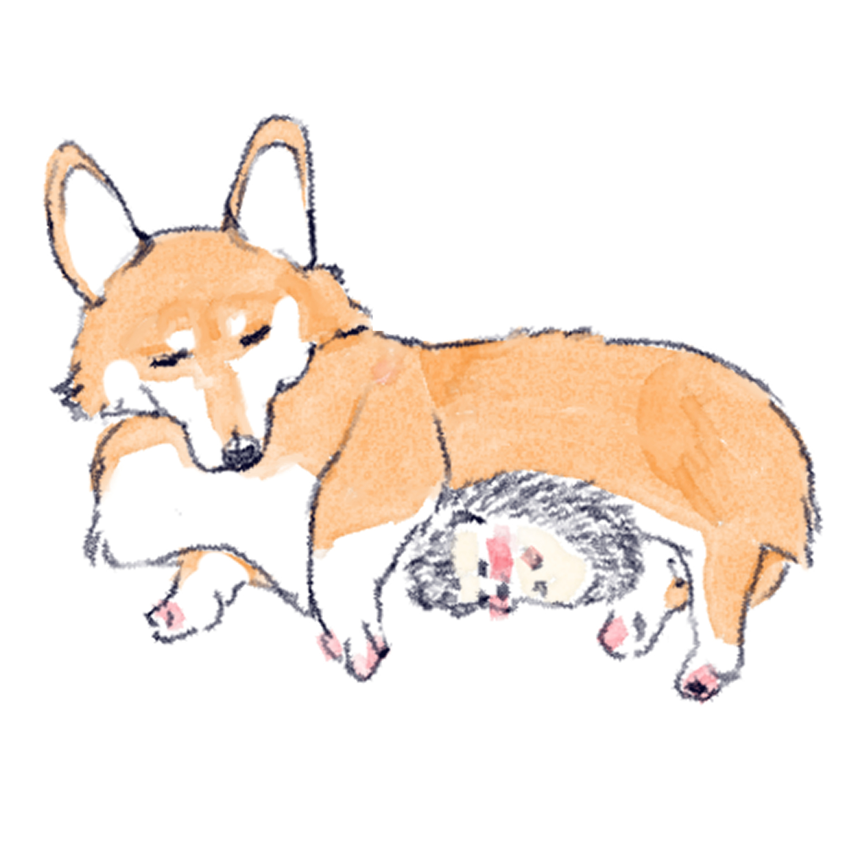 犬に温めてもらうハリネズミのソフィー