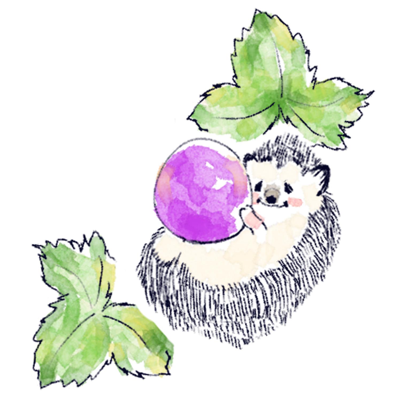 ブドウを食べるハリネズミのソフィー