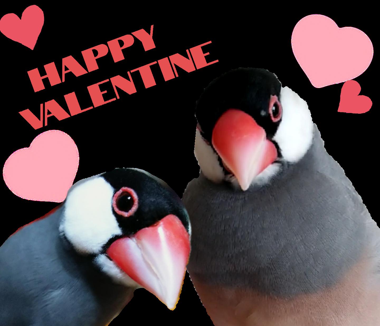 リアルな文鳥さん