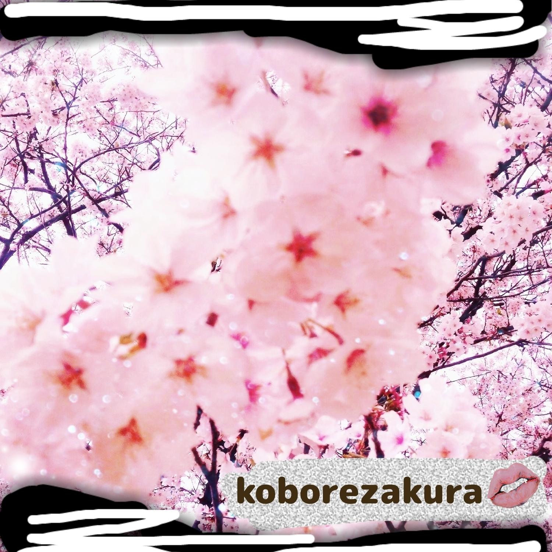 モコモコ🌸零れ桜