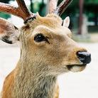 鹿 ( shikakun )