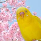 鳥なのにワンちゃん。 ( torinanoni )