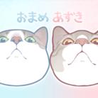 そらまめ@猫LINEスタンプ/着せかえ ( kankansan03 )