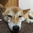 華柴 ( miki0812 )