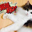 ゆみ猫 ( yumi_neko_0203 )