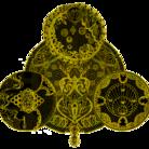 カジタミキ ( mikikajita )
