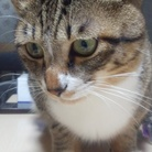 daisuke ( ruha1213 )