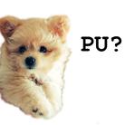 PU-PU ( skri )