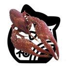 コロリン梟 ( fukurou2828 )