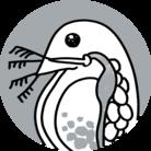 雑貨ぶらんど「微生物」 ( ogwyda )
