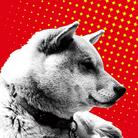 柴犬 ( othersideofhope )