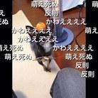 にしざわ ( hosomenagame )