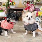 Miko&Berry ( ya-jujun )