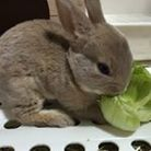 Edward&Bunny ( minirex2015 )