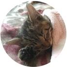 猫屋 ふにゃり ( tetsuya0589 )