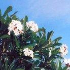 Lanakila_jp ( lanakila1031 )