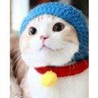 飼い猫 ( yata616 )