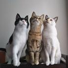 モコネコさんちの猫たち ( moconeko_nya )