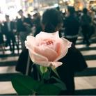DEAR_MY_ROSE ( furukawa_mikaringo )