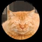 シッポ追いの猫写真店 ( Tailchaser )