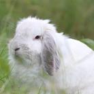 d's rabbit ( tukakyon )