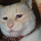 困り猫まつこのお店 ( urumatsu )