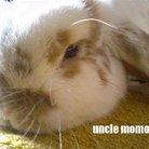 uncle momo ( ai_unclemomo )