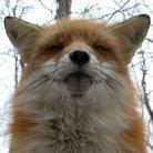 おいなり ( fox_etf )