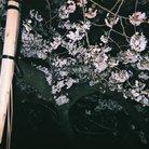 冷やしラーメン ( hiyashiramen )