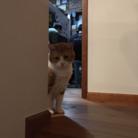 MitsuO