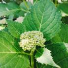 庭先のできごと  花 ( momoko20 )