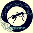 ColorGuardTeamVolare ( c_g_t_volare )