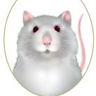 Fancy Rat  ( moery0715 )