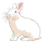 Pink Rabbits ( PinkRabbits )