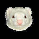 Ferret(フェレット) ( fighting_ferret )