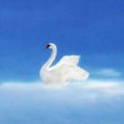 swan songs ( NoR )