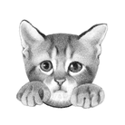 猫の楽園 ( nekoesi )