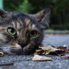 外猫さん ( nekozya )