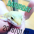 ゆきぽん ( Yan0528Yukine )